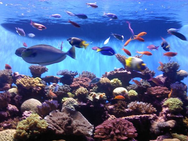 A large coral aquarium with a clean and uncluttered look