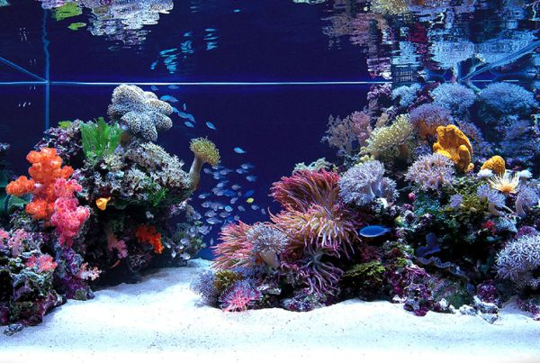 An aquarium that truly looks out of this world!