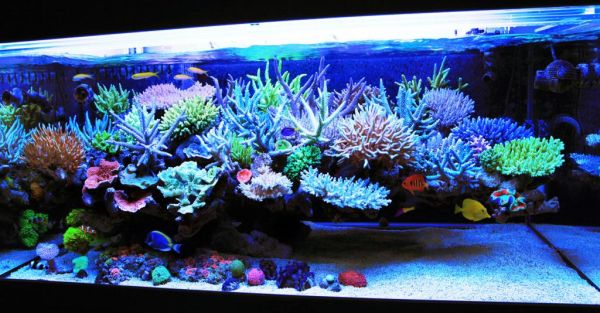 Awesome coral fish tank brings home the world's oceans