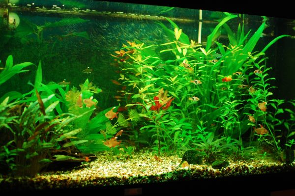 Beautiful home fish tank looks balanced and vivid