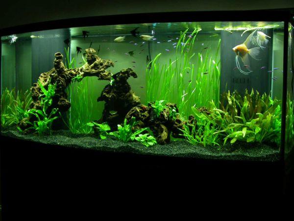 Beautiful underwater vegetation gives this modern aquarium a unique appeal