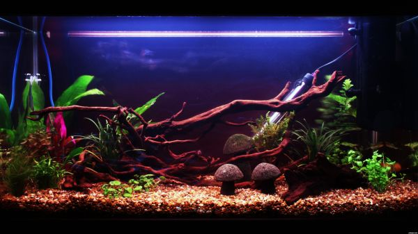 Brilliantly artistic fish tank takes plenty of care to create