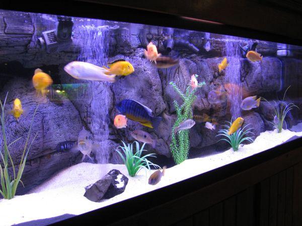 Elegant modern aquarium with a cool backdrop