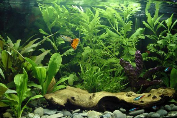 Freshwater Aquarium with plenty of life in it