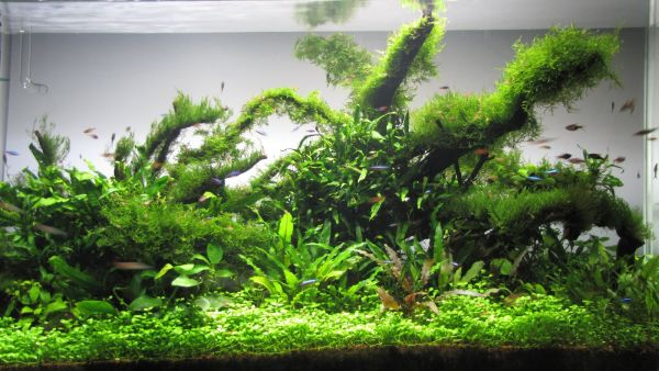 It is not always the fish who steal the show in modern fish tanks