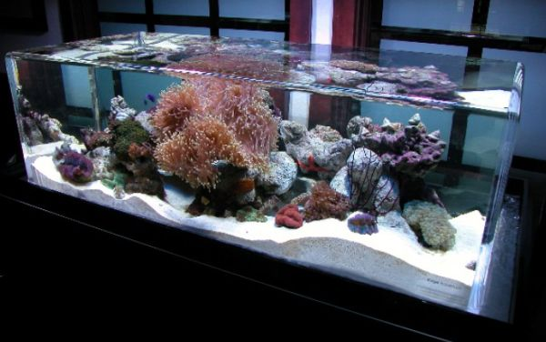 Salt water fish tanks can mimic the ocean bed to perfection