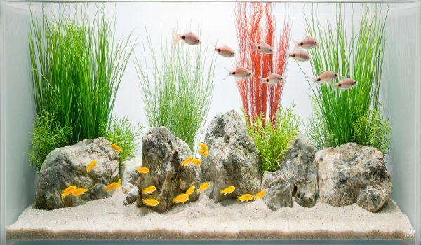 Simple and stylish fish tank design