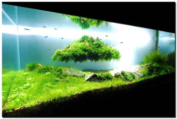 Stunning fish tank design that really kicks in with the green