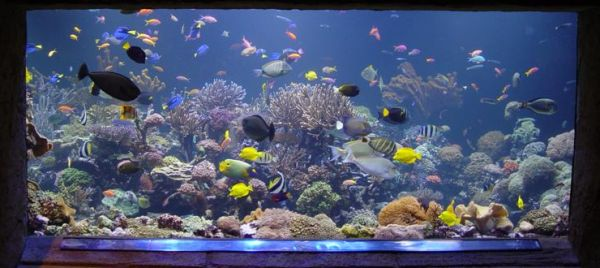 Stylish Fish tank all about creating the cool blue ocean indoors!