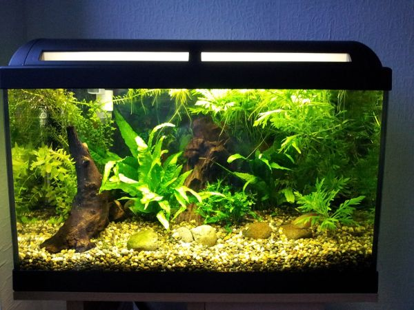 Tropical aquarium designs offer plenty of color and wide variety