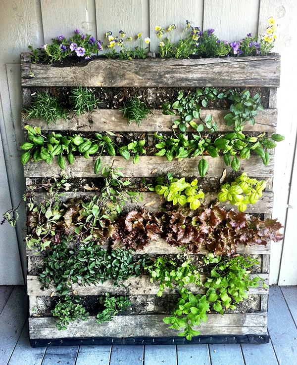 DIY Pallet Vegetable Garden