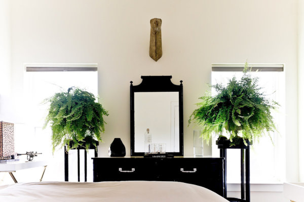 Boston ferns in an eclectic bedroom