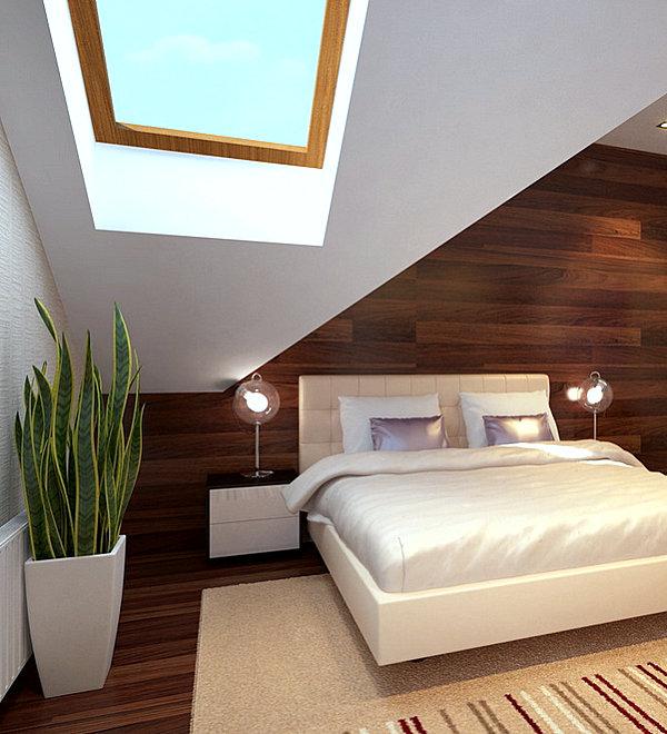 Snake plant in a modern bedroom