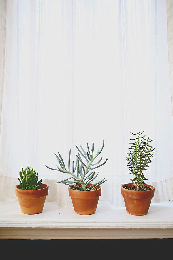Succulents in a light-filled window