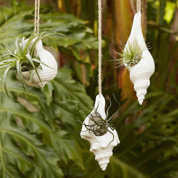 Hanging shell planters from West Elm