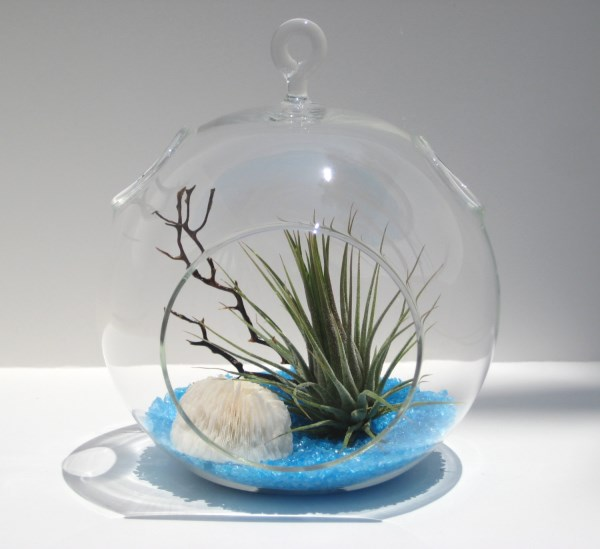 Air plant terrarium with blue recycled glass