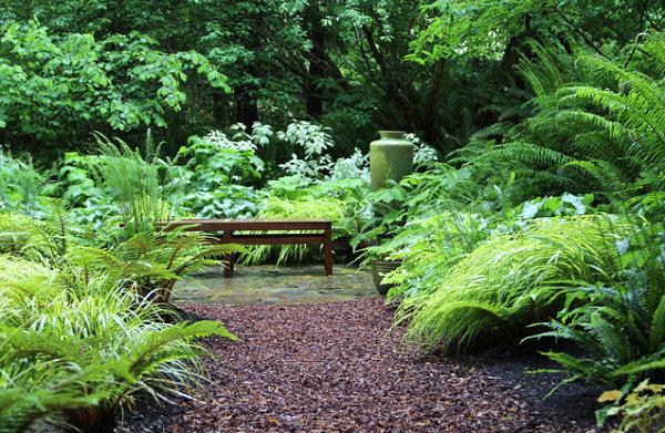 Peaceful shade garden
