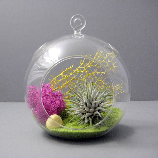 Stunning air plant terrarium from Etsy shop Sea & Asters