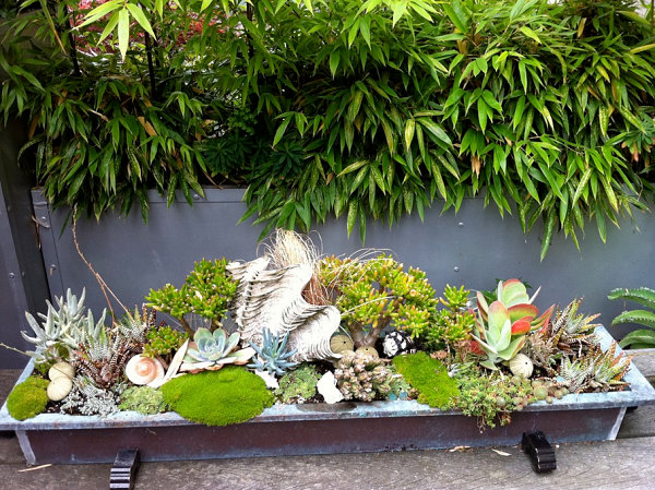 Succulents in a copper trough