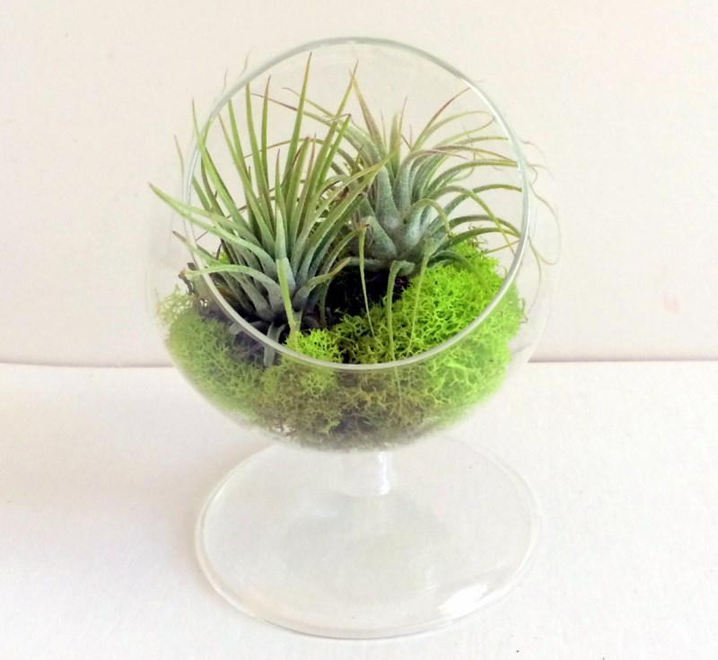 Standing air plant terrarium from Twisted Acres