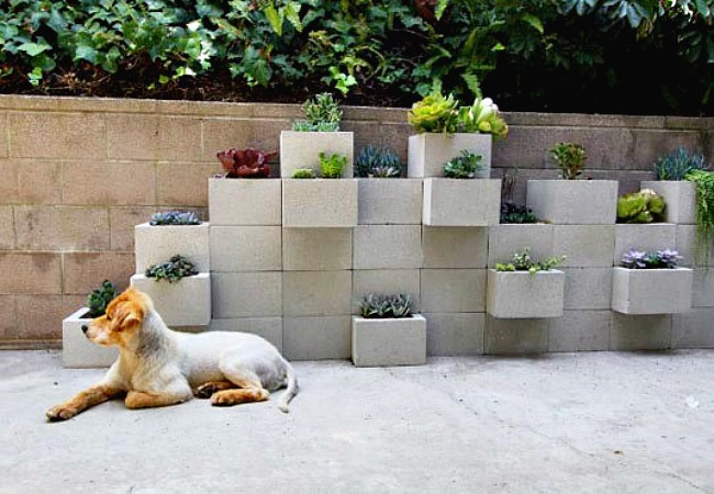 Once these plants start trailing over these cinder blocks they will look even lovelier