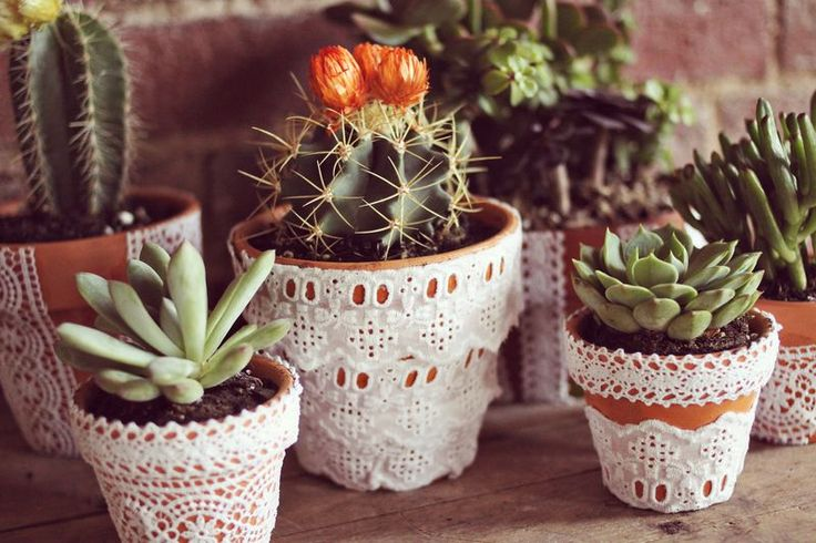Planters dressed up with lace