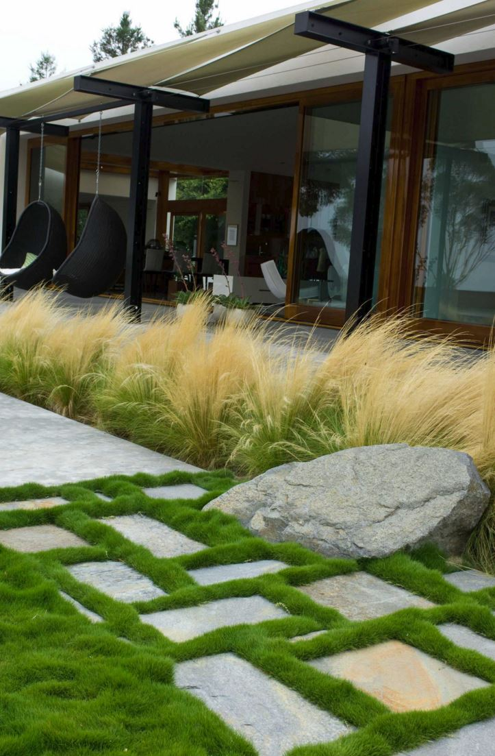 Feather reed grass in a modern yard