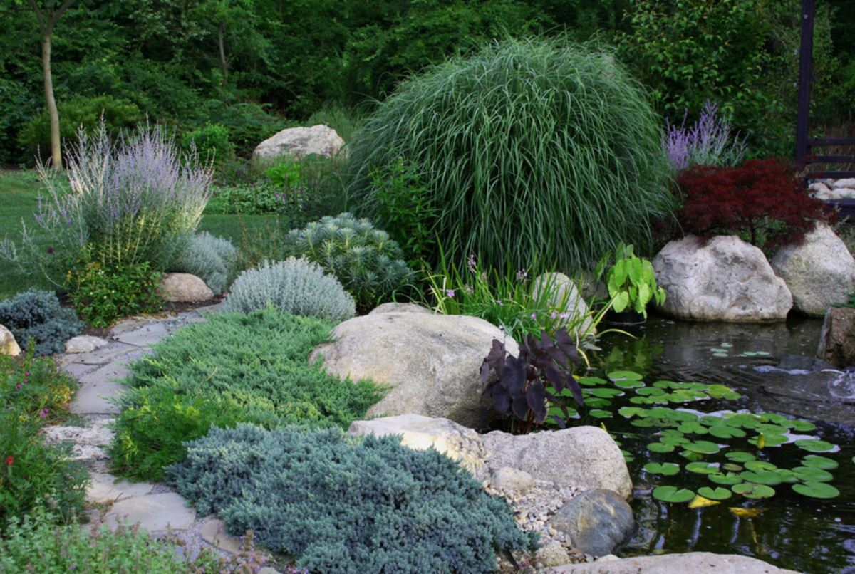 Lush garden pond with ample plant life