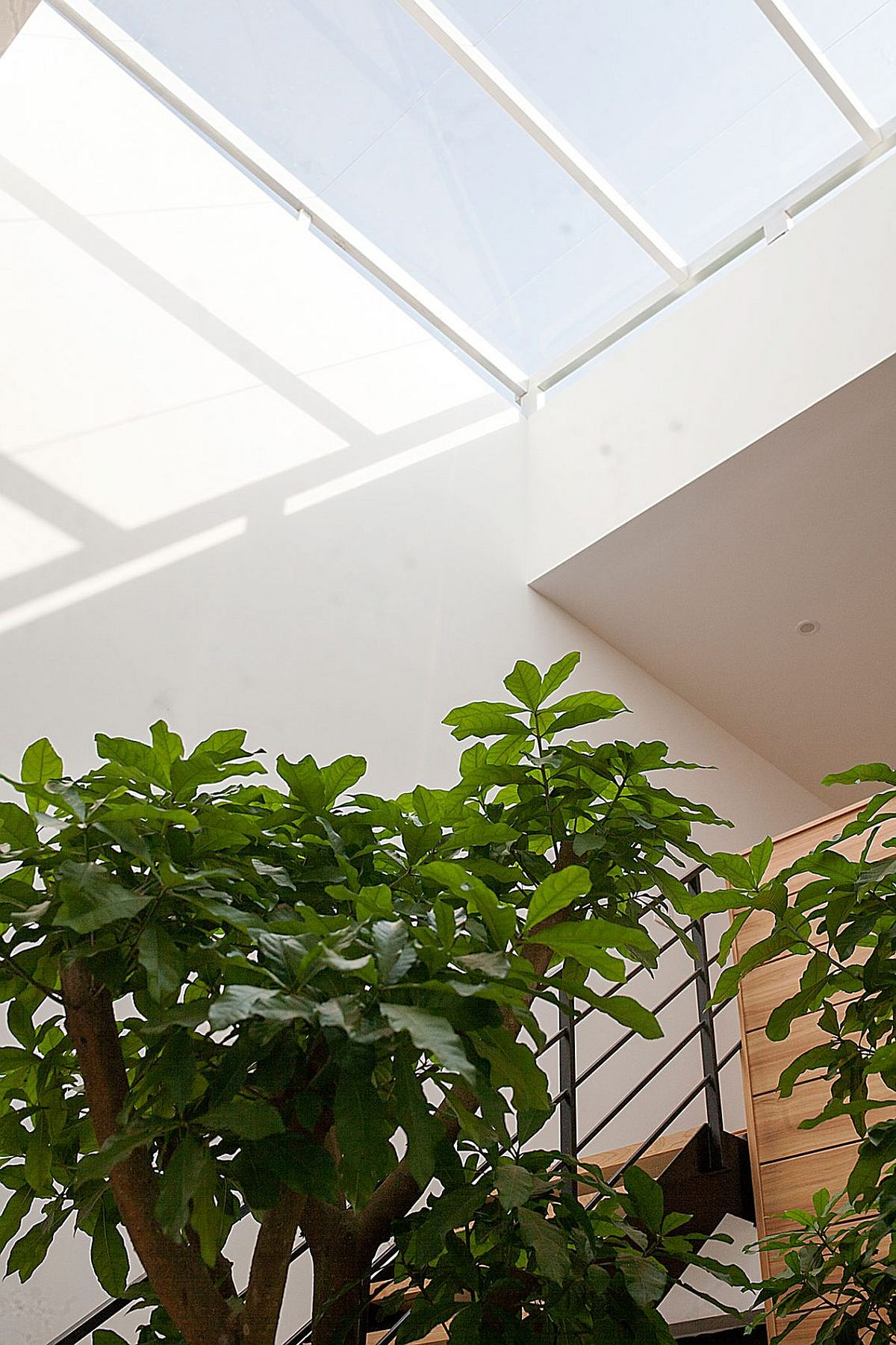 Bringing in natural light allows you to have lovely indoor plants
