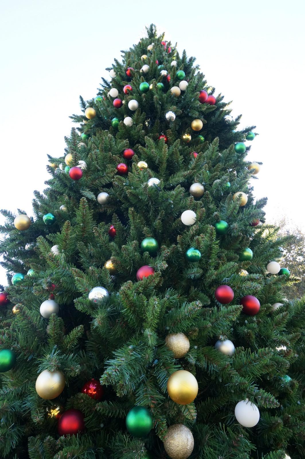 Outdoor holiday tree