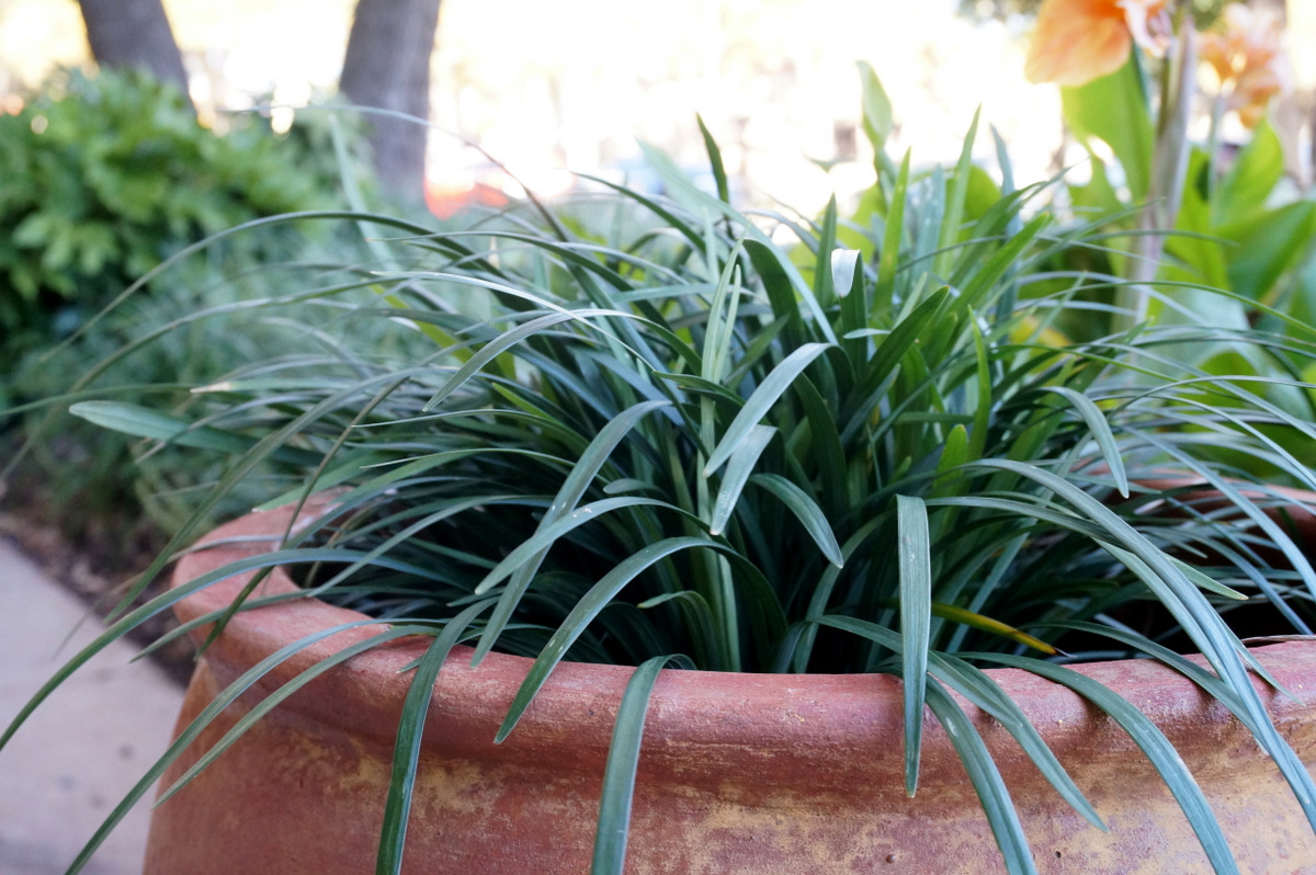 Prepare to cover plants that can't handle the cold