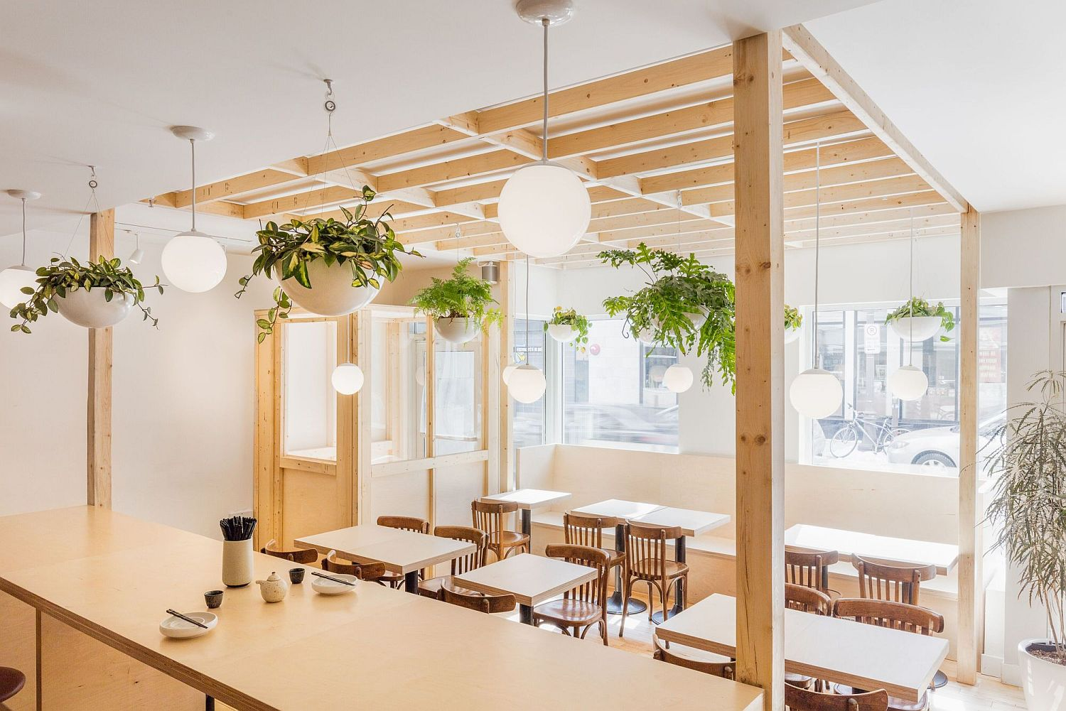 Hanging plants add greenery to the cafe interior